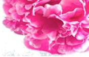 schoonheidssalon-soraya-darphin-bloem2